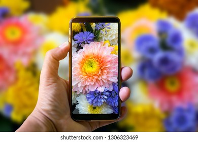 Hand holding mobile phone and take a photo colorful  flowers on blurred background with sunlight.