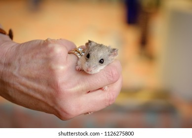 Hand holding mouse