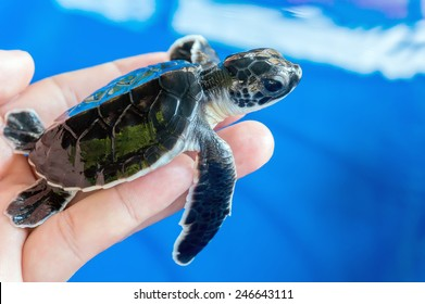 Underwater Baby Sea Turtle Wallpaper