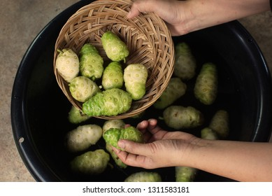 Hand holding noni fruit in basket and noni fruit basin..jpg