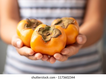 Hand holding persimmon fruit for giving