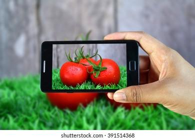 Hand holding phone shooting tomato