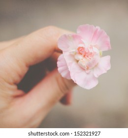 Hand holding pink flower with retro filter effect