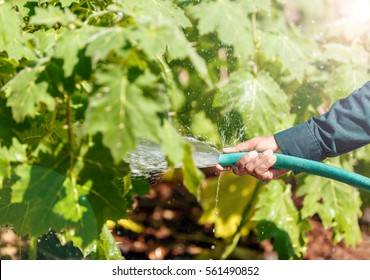 Hand holding pipe spraying water to plant, watering garden