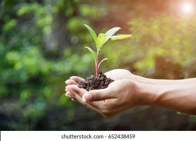 hand holding plant with bokeh and nature background, save the world and World Environment Day concept at sunny day. subject is blurred