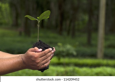 Hand holding and planting new tree with green Forest background