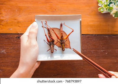 Hand holding plate grasshopper fried insect. Insect food is the healthy meal high protein diet concept. Closeup