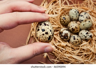 Hand holding a quail egg with more eggs in the background