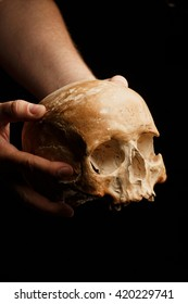 hand holding a real skull is isolated on black background