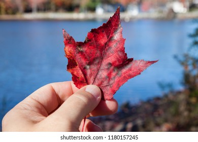 Hand Holding Red Leaf by Blue Lake