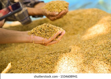 The hand is holding the rice grain