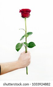 Hand holding rose flower isolated on white background