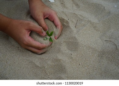 hand holding sapling small tree in sand