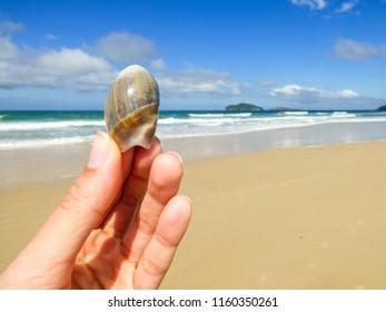Hand holding a seashell at Santinho beach - Florianopolis, Brazil