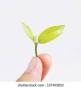 hand holding seed plant
