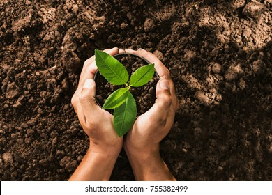 hand holding seed tree in bag for planting into soil