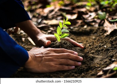 Hand holding seed tree (Bidara) in bag for planting into soil