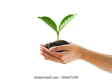 hand holding seeding plant and isolated white background