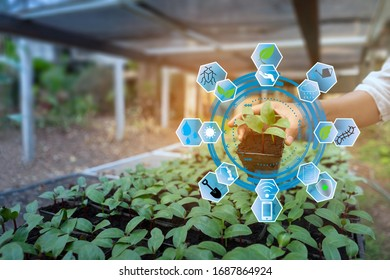 Hand holding small plant in pot with agriculture icons concept smart farmer taking care and protecting plant from prest by technology. - Shutterstock ID 1687864924
