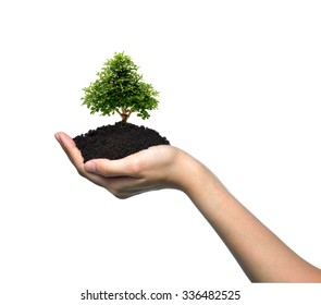 Hand holding a small tree isolated on white background
