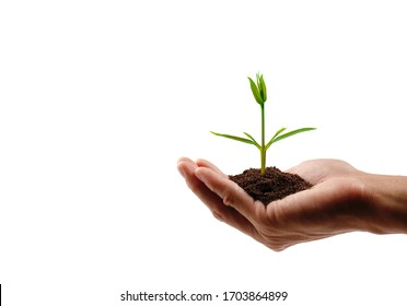 Hand holding a small tree on white background with clipping path. save the earth concept.
