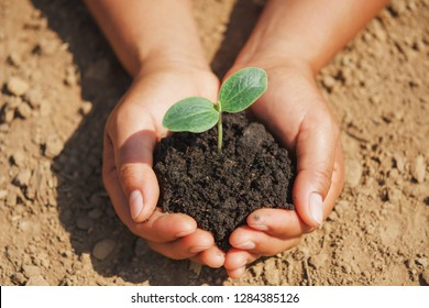 hand holding  small tree for planting in garden. eco concept