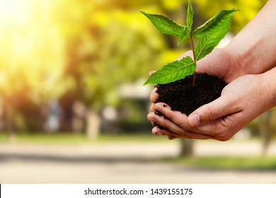 hand holding small tree for planting. concept green world earth day          - Image