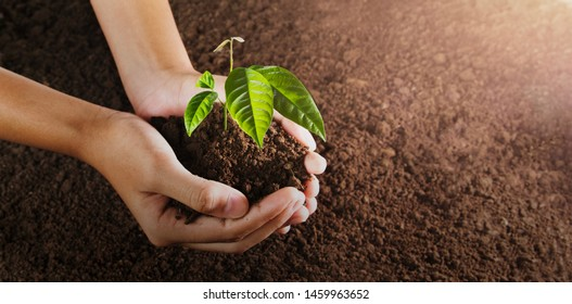 hand holding small tree for planting. concept green world. eco earth day
