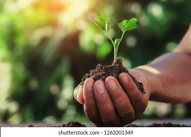 hand holding small tree with sunlight in nature. agriculture concept