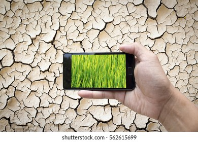 A hand holding a smartphone displaying green grass on a dry and cracked earth background as environmental and technological concept