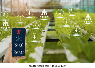 Hand holding smartphone,Organic farm background,agricultural product control technology and agriculture futures trading world market,Using technologies track productivity and Satellite for Agriculture