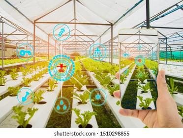 Main tenant un smartphone, arrière-plan bio de la ferme, Concept de technologie de contrôle des produits agricoles, marché à terme de l'agriculture sur le marché mondial, Utilisation des technologies pour suivre la productivité, Satellite pour l'agriculture