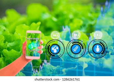 Hand holding smartphone,Organic farm background,graphs showing stocks,Concepts agricultural product control technology,agriculture futures trading world market,Using technologies track productivity