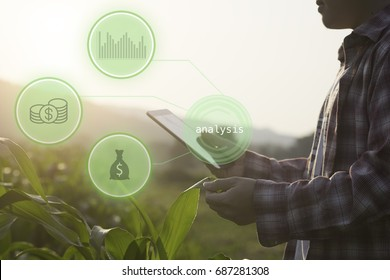 Hand holding Tablet connected with Sensor network and read a report Agriculture technology agricultural field on background.