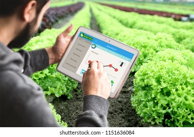 Hand holding Tablet Monitoring Smart farming system in Greenhouse, Agriculture technology revolution,  AI automatic, Conceptual