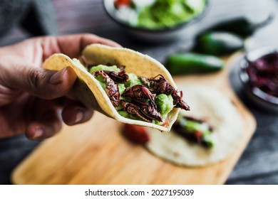 hand holding tacos de chapulines or grasshopper taco traditional in mexican food with homemade guacamole sauce in Oaxaca Mexico