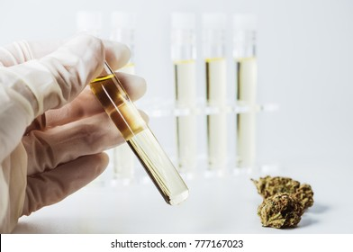 hand is holding a test tube of cannabis oil