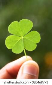 Hand holding three leaf clover