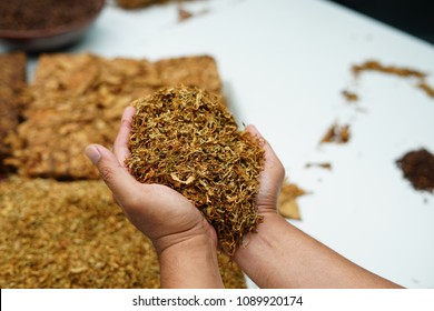 Hand holding Tobacco. High quality dry cut tobacco big leaf, close up, background