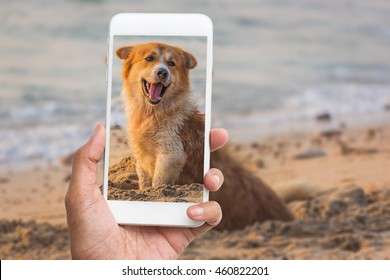 hand holding and touch screen smart phone, cellphone over blurred puppy smile