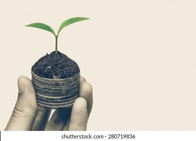 Hand holding a tree growing on old coins / Business with csr practice