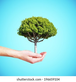 hand holding tree isolated on a blue background