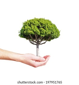 hand holding tree isolated on a white background