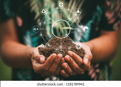 hand holding tree on nature field grass Forest conservation concept,save the word concept