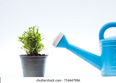hand holding watering can watering plant in Watercress pot, business concept, flat design