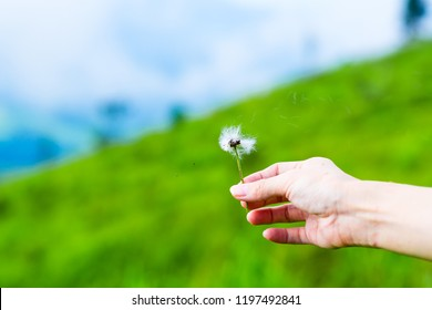 Hand holding white fluffy Dandelion flower blowing away with wind, float in fresh air in meadow field near mountain. Seed dispersal parachutes. Beautiful tranquil nature represent peaceful moment