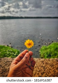 hand holding a yellow flower with a lake view