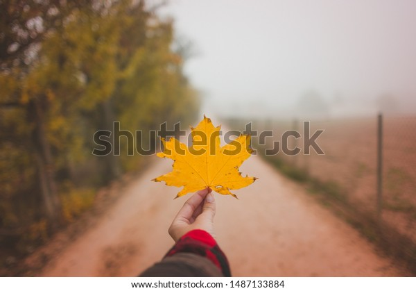 Hand holding a yellow leaf autumn background
