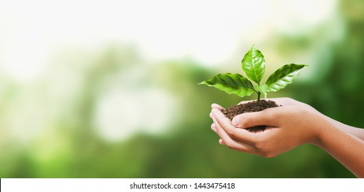 Hand, die eine junge Pflanze auf unscharfem grünem Hintergrund hält. Ökoerdtag-Konzepttag