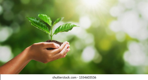 hand holding young plant on blur green nature background and sunslight. concept eco earth day - Shutterstock ID 1554603536